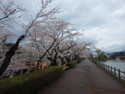 4月18日桜南側.JPG