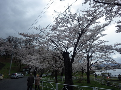 4月18日桜東側.JPG