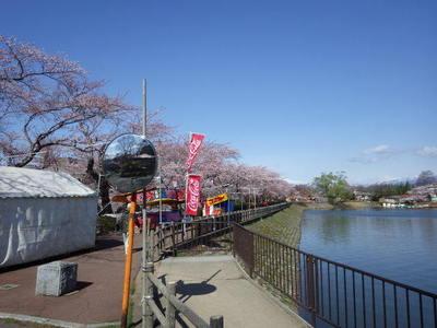 4月19日桜堰堤.JPG