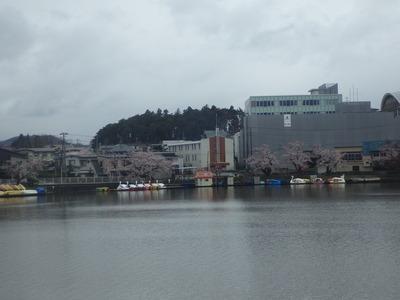4月22日桜3.JPG