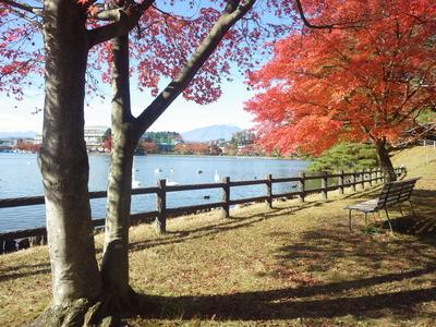 紅葉風景1 (3).JPG